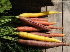 szeretetrehangoltan: Bableves hús nélkül, Toszkánára hangolódva Carrots, My Photos, About Me Blog, Vegetables, Food, Essen, Carrot, Vegetable Recipes, Meals