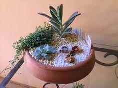 Risultati immagini per composizioni piante grasse