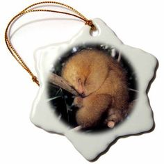 3dRose Silky Pygmy Anteater wildlife, Mangrove, Trinidad -CA43 KSC0002 - Kevin Schafer, Snowflake Ornament, Porcelain, 3-inch