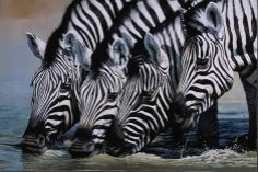 Zebras Drinking, Namibia - painting by Pip McGarry