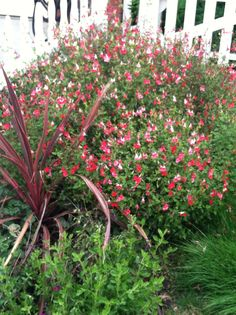 Penstamen Deer Resistant Flowers, Plants, Plant, Planets