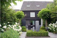 Tummanharmaa talo, poltetun harmaa, vanha, joitakin noista puista, hortensiat