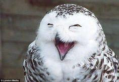 Sonrisa animal