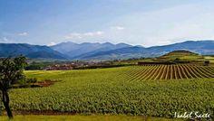 Viñas de Badaran #larioja