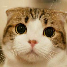 #gatoss