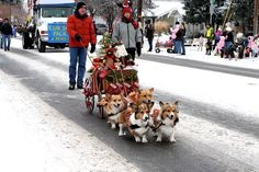 DID YOU KNOW ABOUT THE CORGI CHRISTMAS SLEIGH?!?! | 26 Things That Will Turn Your Bad Day Around In An Instant