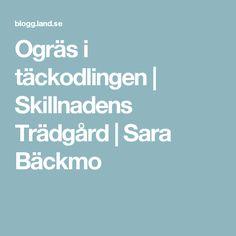 Ogräs i täckodlingen | Skillnadens Trädgård | Sara Bäckmo