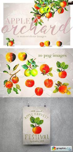 Apple Orchard Watercolour Design Set  stock images