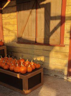 StephC Fall Baby, Travel Style, Pumpkin, Vegetables, Lifestyle, Food, Fashion, Moda, Pumpkins