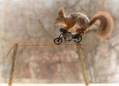 stunting squirrel by Geert Weggen on 500px