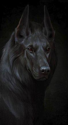 49) wolf dog...