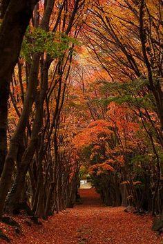 Witness- Autumn in Kawachi Wisteria Garden, Kitakyushu, Fukuoka, Japan Beautiful World, Beautiful Places, Beautiful Pictures, Wisteria Garden, Fukuoka Japan, Japan Japan, Tree Tunnel, Art Japonais, Belleza Natural