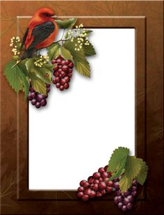 bird frame 2 by collect-and-creat on DeviantArt