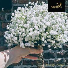 Dit trouwboeket van gipskruid is prachtig wanneer je een mooie witte trouwjurk draagt. Of wanneer je kies voor een speciaal thema voor je bruiloft, zoals vintage of bohemian of wanneer je kiest voor de themakleur wit. Gipskruid wordt voor bruiloften veel gebruik voor de tafelaankleding, corsages en natuurlijk het bruidsboeket. Dit boeket is samengesteld door Fleurop bloemist 't Blumpke uit Gulpen.