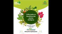 Os suplementos biológicos Organic India, embalados em frascos de vidro, utilizam toda a planta e não apenas o princípio activo, do que resulta um produto mais eficaz e equilibrado.