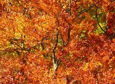 Los mejores destinos para conocer en otoño