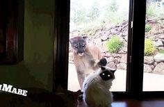 Tom trykket på «record» i rekordfart da dette beistet stod utenfor døren Dog Cat, Images, Dogs, Windows, Animals, Cat Breeds, Searching, Animales, Animaux