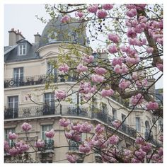 Cherry Blossoms in Paris French architecture от SonjaCaldwell