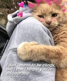When you think about cats, you feel like him cute.Its truth that the cat is cutest animal but as well as they are so naughty.Today we collect some wholesome Cat Memes that are so funny and humor.Just check it and keep enjoy. Cute Couple Memes, Cute Cat Memes, Cute Love Memes, In Love Meme, Memes Humor, Bf Memes, Funny Memes, Crush Memes, Cute Messages