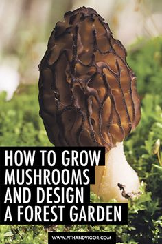 Organic Vegetable Gardening How to grow mushrooms and design a gourmet forest food garden - Go beyond just growing mushrooms, plan an attractive forest garden that produces a variety of gourmet treats.