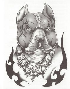 pitbull drawings - Google Search