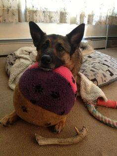 Grote bal hond speelgoed door Doodlebug Duds door doodlebugduds