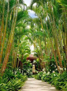 Tropical Landscaping Area 8 Result #tropicalbackyardgarden #TropicalGarden