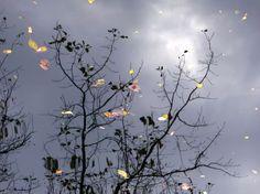 Reflection II Photo by Saba Khozoui — National Geographic Your Shot