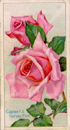 Antique Passion-Láminas Antiguas,Vintage,Retro...y manualidades varias: Rosas para todas...