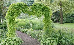 Die Bierwürze kennt jeder – aber kaum jemand weiß, dass der Hopfen auch als Gartenpflanze äußerst dekorativ ist. Hier finden Sie Pflanz- und Pflegetipps rund um die Kletterstaude.