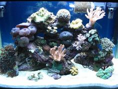 Aquarium Fish Tank Seawater Coral Reef Phone Camera Filters Lens Macro Low top1