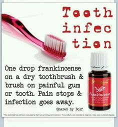 Cute Pet: Young Living Frankincense Essential Oil for Tooth Infection.