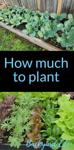 How much to plant | How many of each plant to grow | Organic Gardening | Organic Gardening for Beginners | Planning a garden | Organic Fertilizers | Gardening Tips | Vegetable Gardening | Backyard-Eden.com