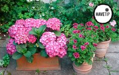 Outdoor Plants, Garden Inspiration, Floral Wreath, Flowers, Blog, Beautiful, Gardening, Home Decor, Balcony