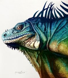 Iguana is a genus of herbivorous lizards native to tropical areas of Mexico, Central America, several islands in Polynesia such as Fiji and Tonga, and the Caribbean. The genus was first described in 1768 by Austrian naturalist Josephus … Design Graphique, Art Graphique, Animal Drawings, Art Drawings, Animal Illustrations, Illustration Animals, Iguana Tattoo, Iguana Verde, Green Iguana