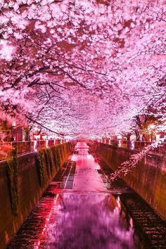 "banshy: ""The Nakameguro Cherry Blossom Festival by Kamakura Cafe "" Japan Cherry Blossom Wallpaper, Sakura Cherry Blossom, Cherry Blossoms, Japan Cherry Blossom Festival, Beautiful World, Beautiful Places, Beautiful Pictures, Beautiful Nature Wallpaper, Beautiful Landscapes"