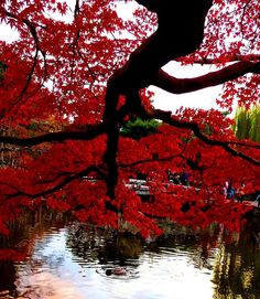 The beauty of Kyoto, Japan creates inspiration for the beautiful and delicate plating you find at Nobu Restaurants EATING OUT Kanazawa, Oh The Places You'll Go, Places To Visit, Beautiful World, Beautiful Places, Cool Pictures, Cool Photos, Red Tree, All I Ever Wanted