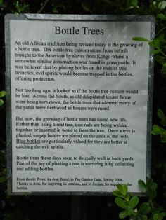 Outdoor Bottle Tree | Kanapaha Botanical Gardens Bottle Tree - The origin of Bottle Trees. by bankeney