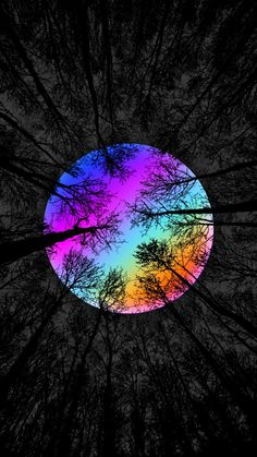 Rainbow Forest iPhone Wallpaper - iPhone Wallpapers