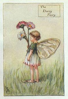 The Daisy Fairy