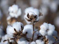 Textiele Grondstoffen: Natuurlijke vezels, wol,katoen,vlas. Kunstvezels: nylon,rayon,acetaat.