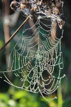 Koti kolmelle - Sisustus & Lifestyle #kotikolmelle Summer Shots, Fern Forest, Forest Cottage, Koti, Finland, Habitats, Watercolour, Woodland, Autumn