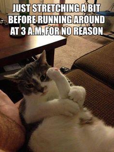 .hahaha..my cat at 4 am!!