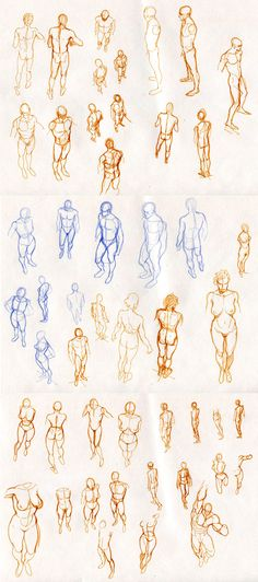 anatomy references for drawing