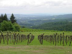 Willamette Valley, Oregon...lived near here too.  Used to drive by the Willamette Valley Vinyard off of I-5 all the time.