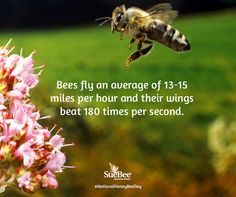 National Honey Bee Day Save The Bees, Bee Keeping, Honey, Day