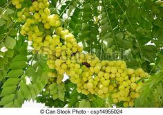 Fruit Plants, Fruit Trees, Trees To Plant, Raised Garden Beds, Raised Beds, Back To Nature, Vegetable Garden, Greenery
