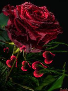 Красная роза на фоне сердечек