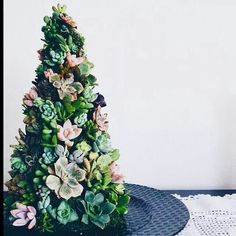 (Summer christmas) Succulent Christmas tree by ROTDcreations Australian Christmas Tree, Aussie Christmas, Summer Christmas, Christmas Crafts, Christmas Decorations, Holiday Decor, Bohemian Christmas, Types Of Christmas Trees, Real Christmas Tree