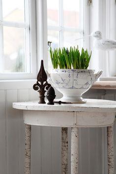 ℬᎧℒℐᎶ ℐ ℱℛᎯᏁЅᏦ ℒᎯᏁᎠЅTℐℒ: En smuk, gammel suppeterrin er brugt som urtepotteskjuler.